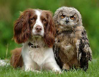 dog-owl