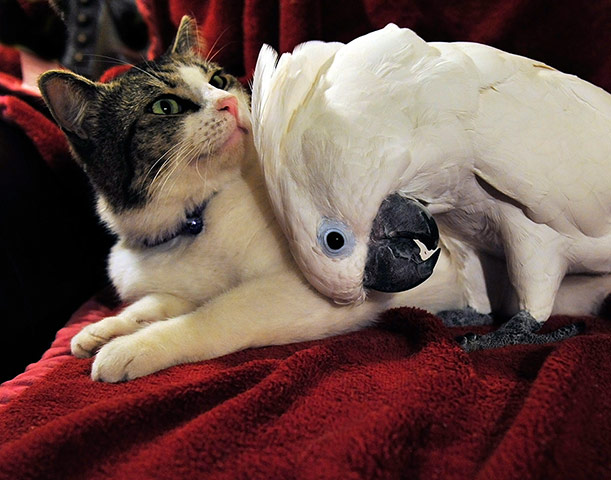 The-cat-and-the-cockatoo-007