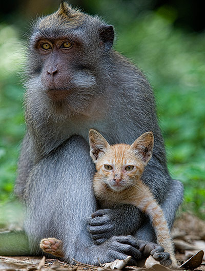 The-macaque-and-the-cat-001