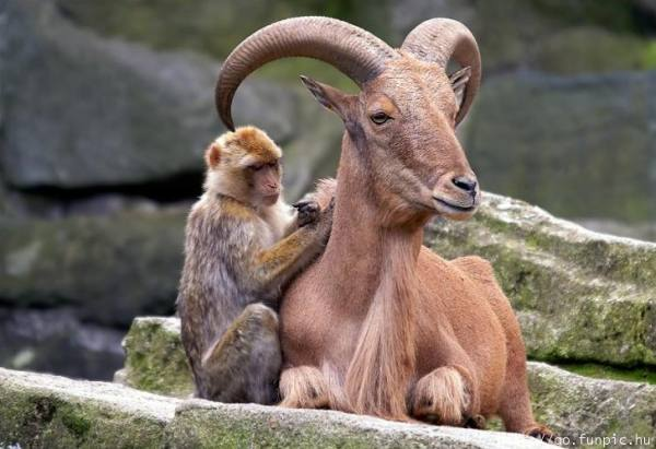 unlikely-animal-friendships-16
