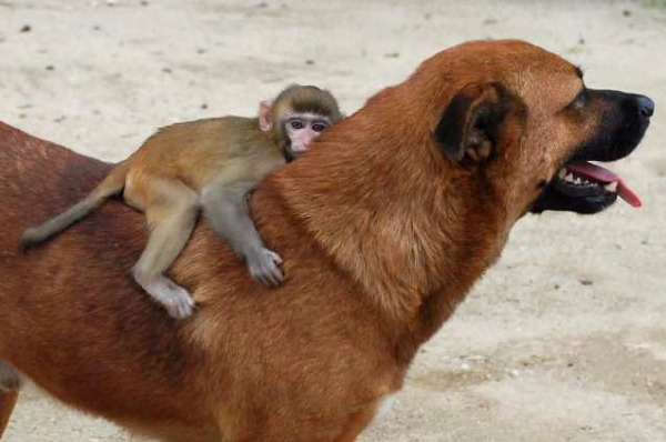 unlikely-animal-friendships-6