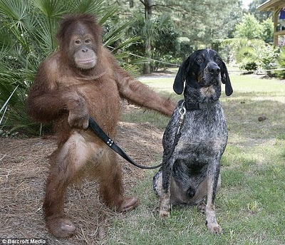 unlikely-animal-friendships-8