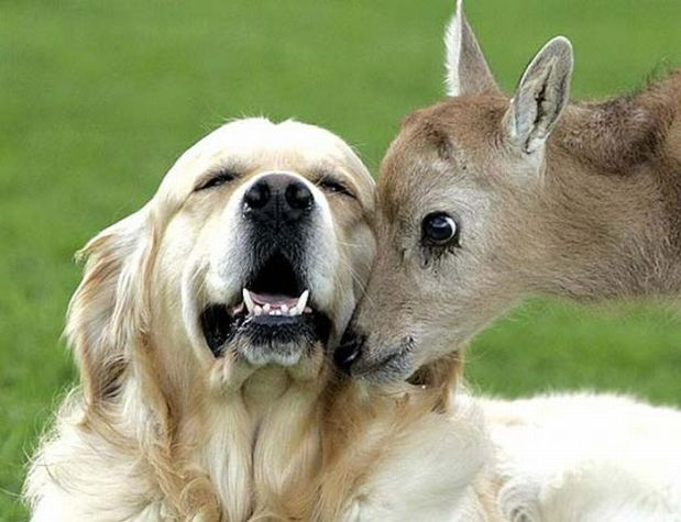 unlikely_animal_friendships_17