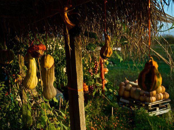Κήπος. Οι λίγες βροχοπτώσεις, τα φτωχά εδάφη, και η μείωση του εργατικού δυναμικού έχουν συρρικνώσει τον γεωργικό τομέα σε πολλά μέρη της Ελλάδας.