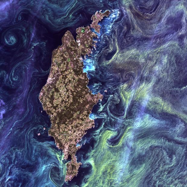Σαν ένας άλλος πίνακας του Van Gogh είναι η εικόνα από τη μαζική συγκέντρωση φυτοπλανγκτόν, γύρω από το νησί Gotland της Σουηδίας, στη θάλασσα της Βαλτικής. Η λήψη έγινε στις 13 Ιουλίου 2005