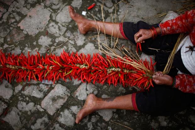Αγρότης στο Νεπάλ ετοιμάζει τσίλι για αποξήρανση.