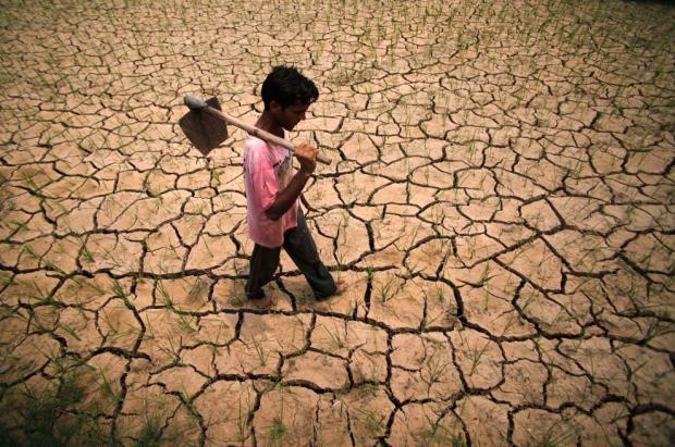 Γεωργός περπατάει σε ριζοχώραφο στα περίχωρα του Τζαμού, Ινδία