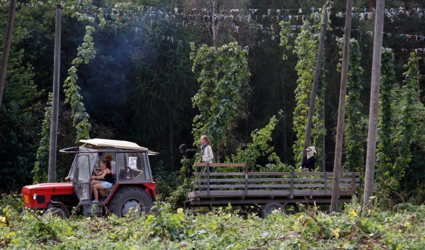 Αγρότης σε συγκομιδή λυκίσκου στο Rocov, Τσεχία