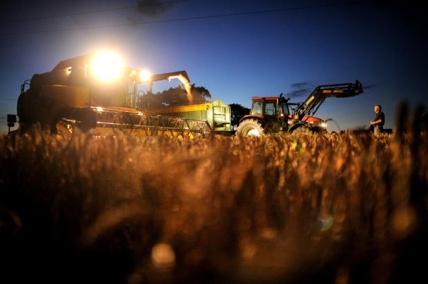 Σιτάρι φορτώνεται από θεριζοαλωνιστική μηχανή στο Ανόβερο-Wuelferode, Γερμανία