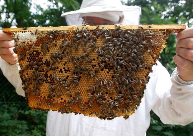 Μελισσοκόμος στη Βιέννη δείχνει μια κηρήθρα με μέλισσες.