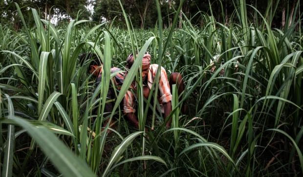 Σύμφωνα με στοιχεία των Ηνωμένων Εθνών, οι Ινδοί που ζουν σε αγροτικές περιοχές, κατά μέσο όρο τρώνε 2.020 θερμίδες την ημέρα, κάτω από  τον παγκόσμιο μέσο όρο των 2.800 και 11% λιγότερο σε σχέση με  το 1973.